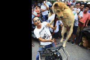 Fermiamo il massacro di cani e cuccioli