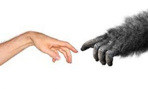 Il falso mito dell'Africa culla dell'uomo